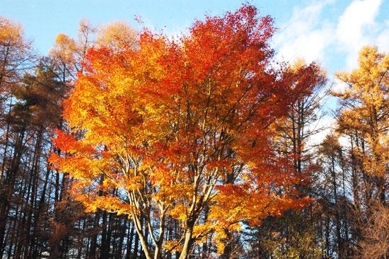 秋のキャンピカ明野